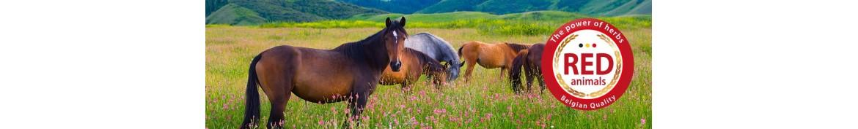 Produtos e suplementos alimentares naturais para cavalos.