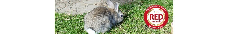 Producten en natuurlijke voedingssupplementen voor konijnen