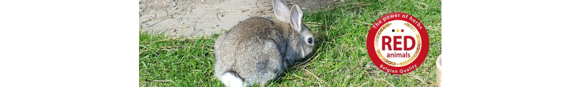 Natural food products and supplements for rabbits