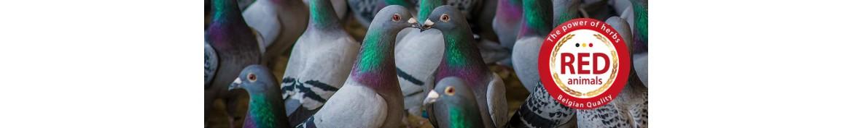Produkte und natürliche Nahrungsergänzungsmittel für Tauben.